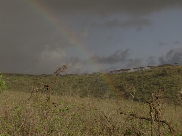 Somewhere in the Serengeti